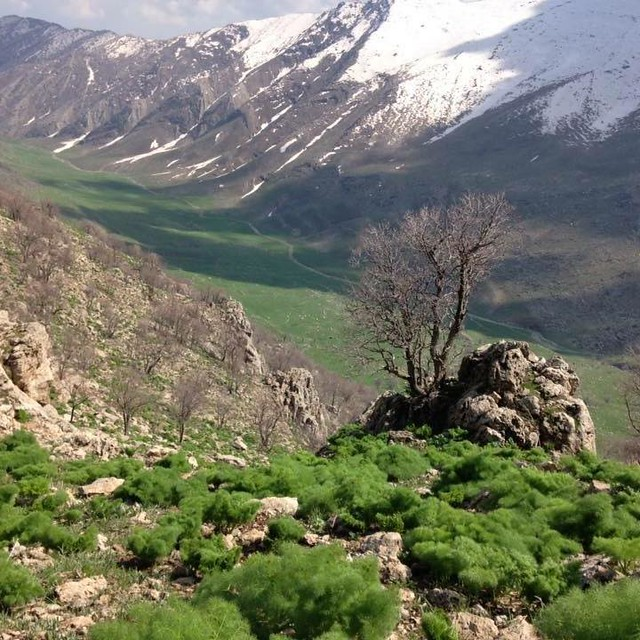 Kurd û Kurdistan
