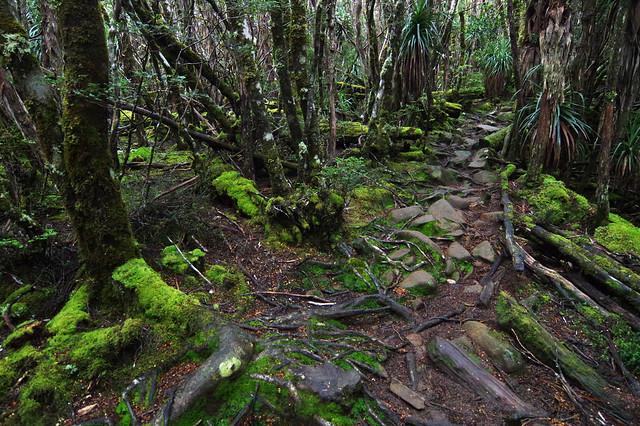 Day 2: Myrtle-beech rainforest at Mt Pelion West