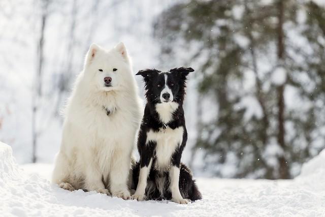 Bella & Finn