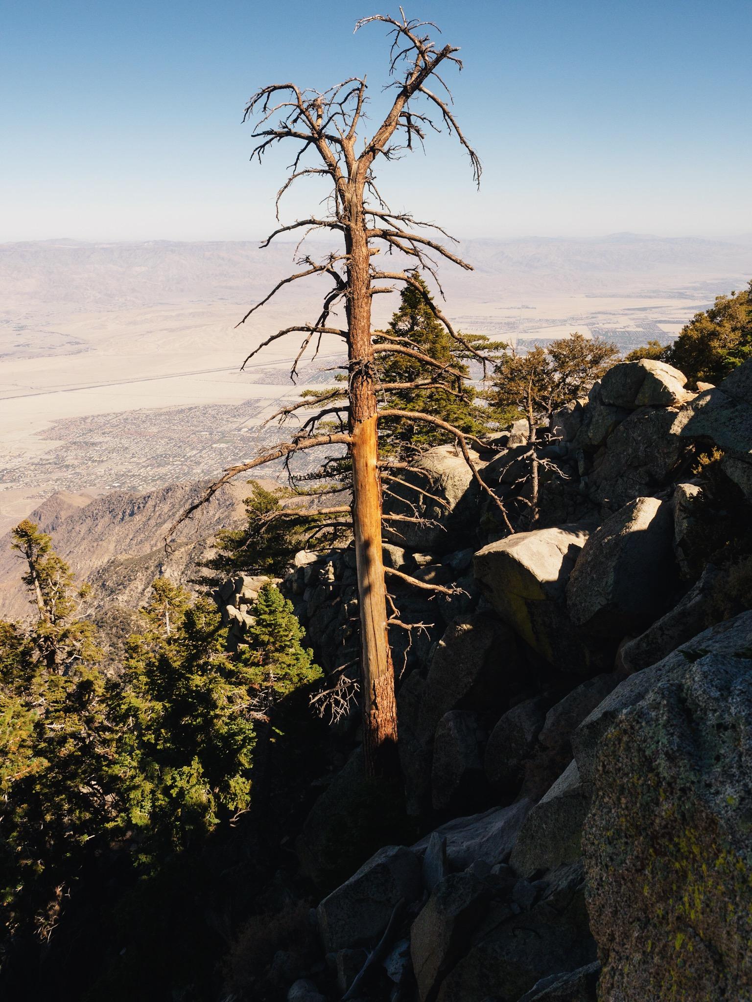 Elevation of Foster Lake, Idyllwild-Pine Cove, CA, USA ...