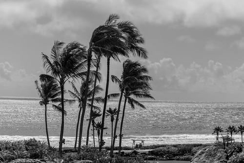 80400mmf4556dvr afvrzoomnikkor80400mmf4556ded america arena bw beach blackwhite blackandwhite blancoynegro bãibiển coast coastal cobblestones color couple d610 eeuu estadosunidos fullframe gente grava gravel greenplants hawaii human humanbeing island kauai kauaʻi kingdomplantae landform lens mar mare mer monochrome nature nikkor nikkor80400mm nikkor80400mmf4556dafvred nikkorlens nikon nikond610 noiretblanc northamerica ocean oceansea oceanea oceano outdoor people pacific pacificocean palm palmtree palmtrees pebbles