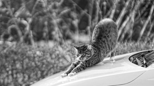 20180330-164421 - Car Cat Bokeh | by torstenbehrens
