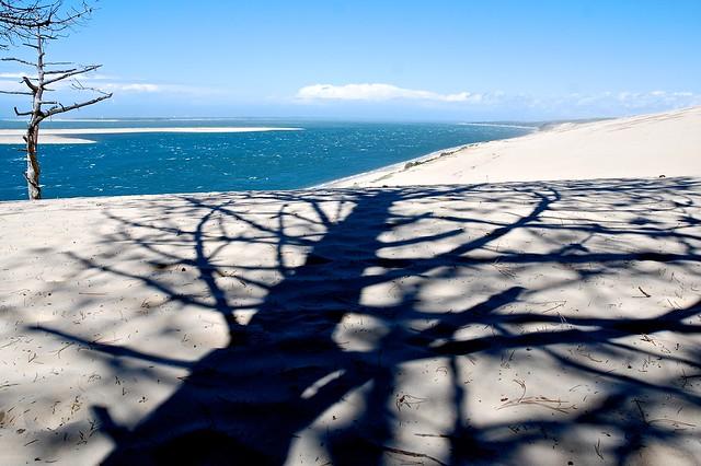 Shadow of tree on sand dunes
