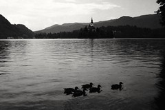 Bled lake, 2018
