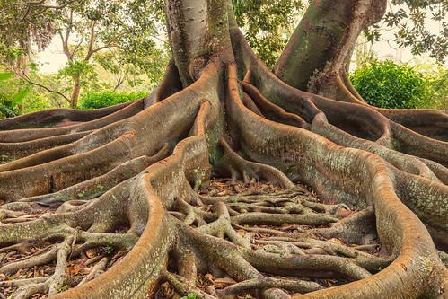 Roots   by mclcbooks