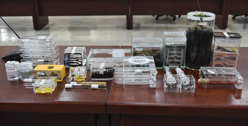 於民眾住處搜索查獲之蟻巢,皆屬違規輸入。圖片來源:防檢局提供