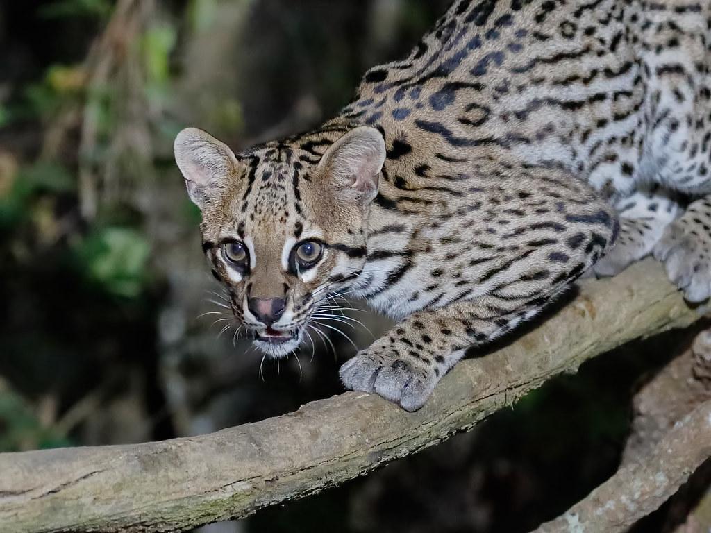 Pantanal_1266