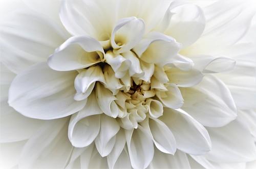 Soft white.