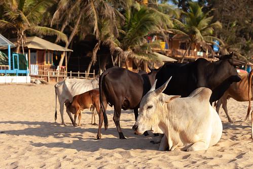 Agonda - Goa | by Scalino