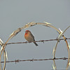 The  Ultimate Barbed Wire Security System. by Romair