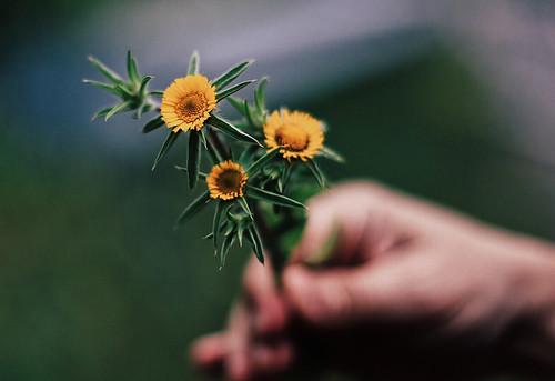 Flores para un lunes | by soloporlaluz