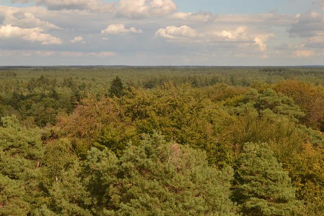 Uitzicht op het bos vanaf de uitkijktoren Besthmenerberg (134FJAKA_1805)