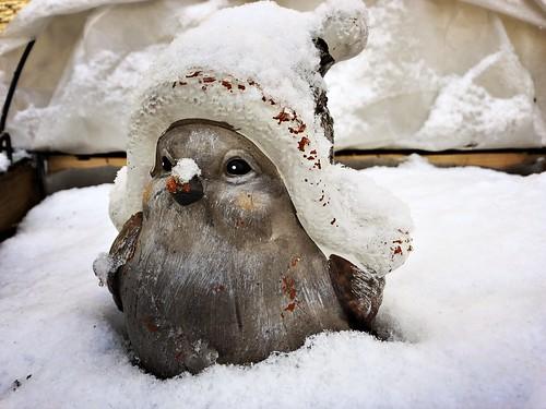 Titty still all snowy | by Marilka