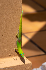 kites and lizard-16.jpg