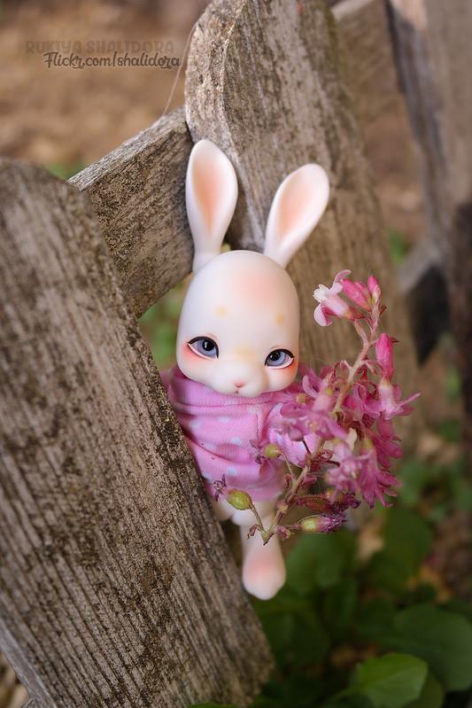 Rukiya's Dolls MAJ 14/10 ~Happy Halloween !~ p33 - Page 33 32656570107_b461a09e9e_c
