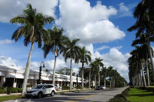 naples florida usa downtown streetviews city road avenue street palmtrees trees sky bluesky palmtree tree house building buildings grass green car dnysmphotography dnysmsmugmugcom
