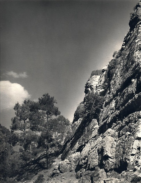Pines by the rock wall, Troodos, Cyprus