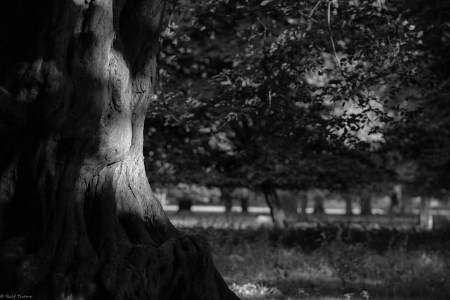 Lichtspuren am Baum