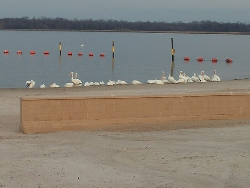 American White Pelican. At Poverty Point Reservoir. North of Delhi, La., on Hwy 17. Nice manmade sandy beach there. This location is about 2 miles north of the main entrance. | by Doc's Photo Gallery