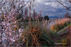 Au fil de l'eau ... Les berges de la Siagne by Tonino A