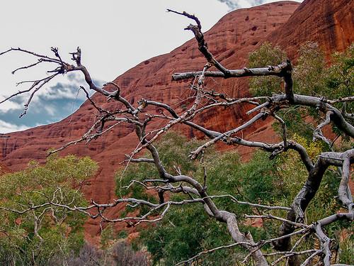 Uluru_20.jpg