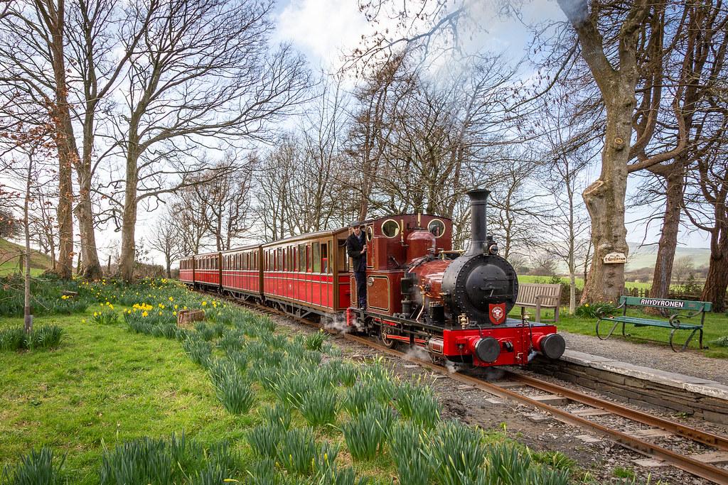 Early daffodils, Talyllyn Railway by Barbara Fuller