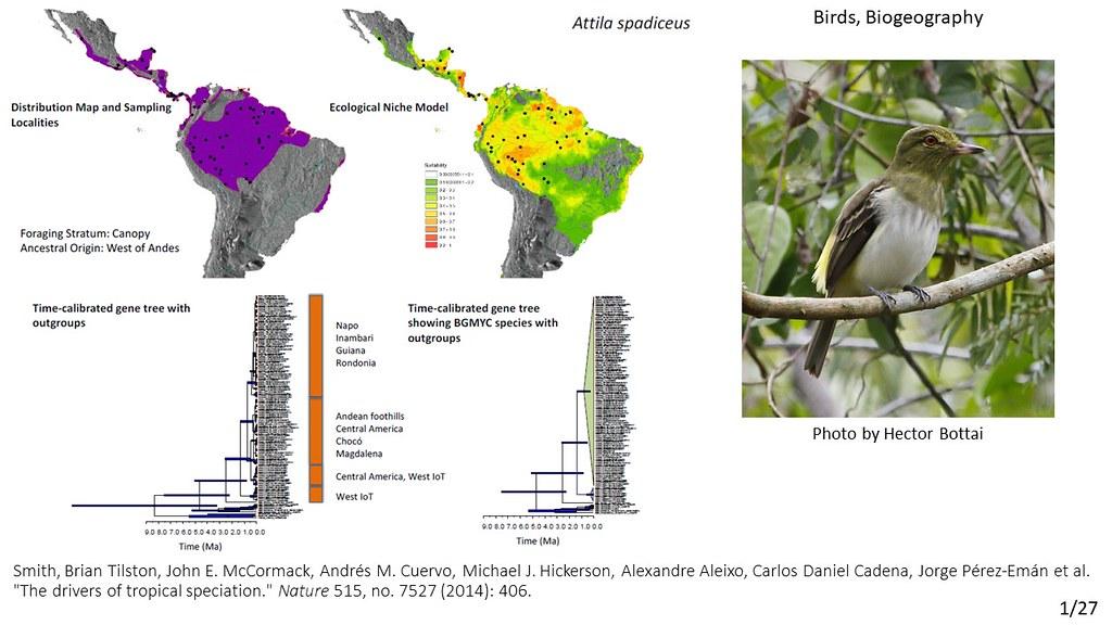 Smith et al. 2014 - Attila spadiceus