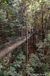 Tree top Walkway   by Jim Scarff