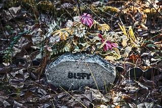 Day 10. Buffy.  Fort McClellan Pet Cemetery