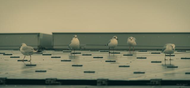 Five Birds.