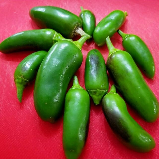 Today's harvest: Coolepeño Peppers. Believe it or not, my two year old Coolepeño Peppers still have have fruits and leaves. I didn't realized how much we had left since the leaves camouflage the green fruits. I'm going to dice these up to add to a Chicken