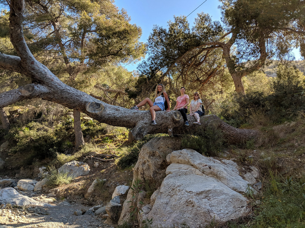 3 people standing on top of a fallen tree, over a dry river bed