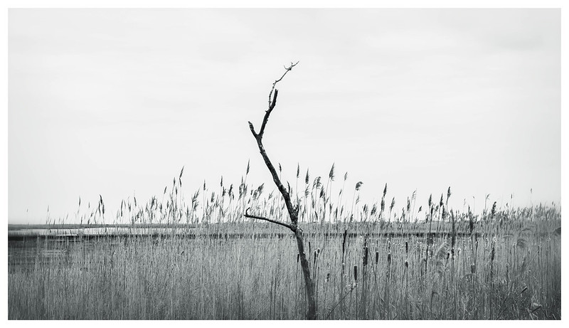 A Branch in the Grass