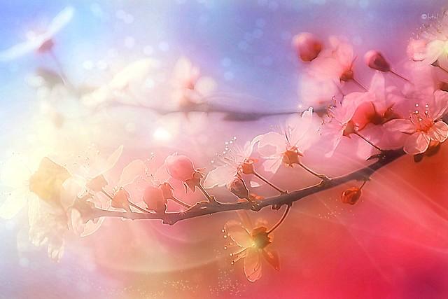 Pastel Spring. A Slider:-)