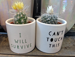 Famous cacti 🌵 Gloria gaynorius and Stoppus hammertimerus | by dullhunk