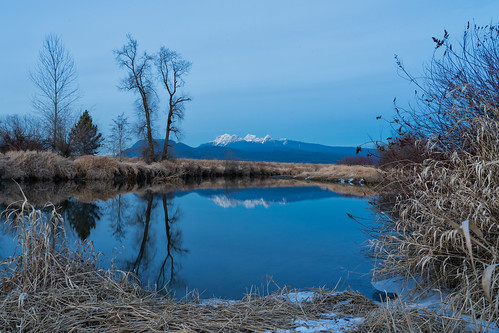winter snowcapped mountains alouetteriver mapleridge dyke transcanadatrail reflections snow frozen cold weather grassland trees sonya73 landscape canada britishcolumbia lowermainland bc