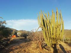 Baja California 2019