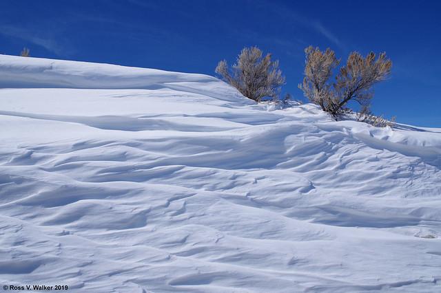Sagebrush and Snow