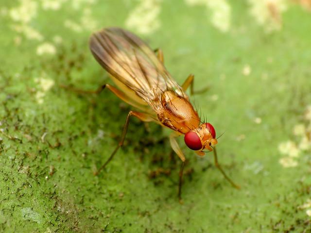 Druid Fly