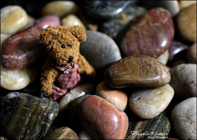 Tiny Bear On The Rocks...