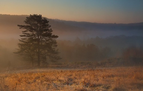 ashdown forest tree trees mist fog valley landscape eastsussex uckfield crowborough mood dreamy