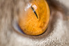 Cat's eye by charlieriz