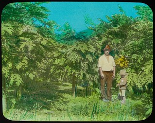 Man and young boy standing in front of a fruitbearing pawpaw tree, Yeppoon, Queensland, ca. 1910