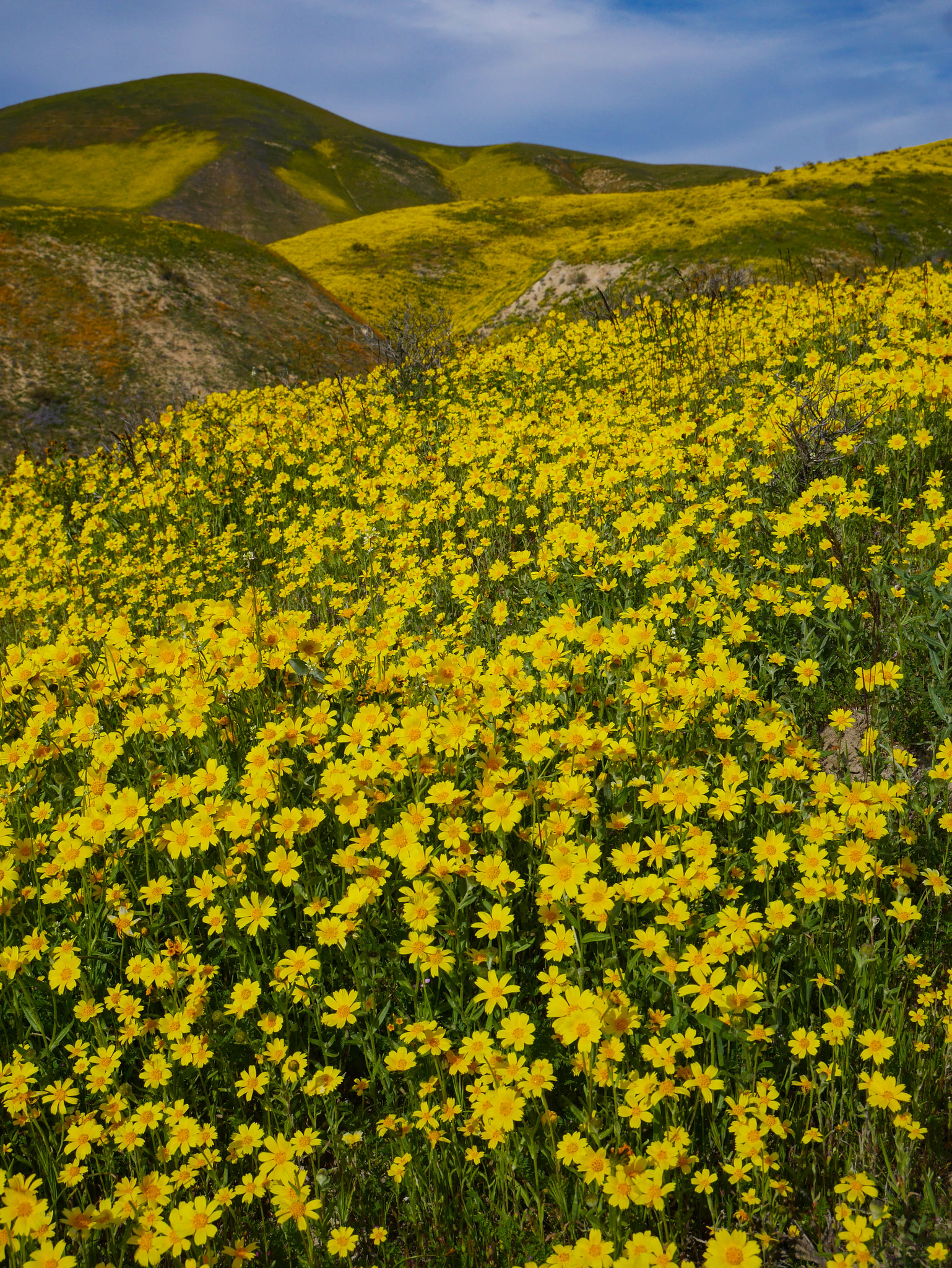 Superbloom in the Temblor Range