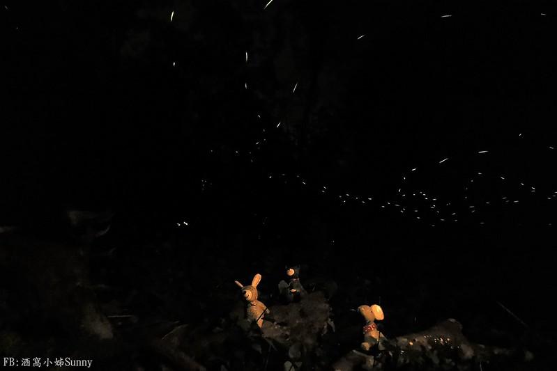 用手機也能拍出螢火蟲之第一次賞螢拍螢就上手