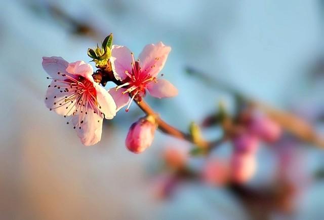 Couleurs de printemps -1-