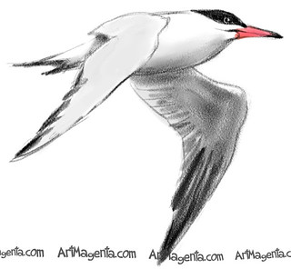 Caspian Tern (Z0228) #bird #birding #birdwatching #birdfreaks #art #artist #kings_birds #illustrationartist #bb_of_ig #arts_gallery #your_best_birds #birddrawing #visualdevelopment #instadraw #birdart #art_empire #nuts_about_birds #sketchaday #birdpaintin | by ArtMagenta