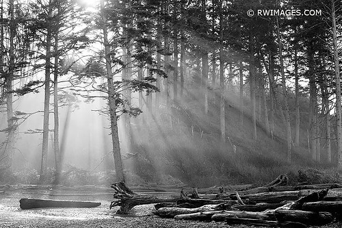 SUNRISE COASTAL FOREST OLYMPIC NATIONAL PARK WASHINGTON PACIFIC NORTHWEST BLACK AND WHITE HORIZONTAL | by ❏ FINE ART PHOTOGRAPHY