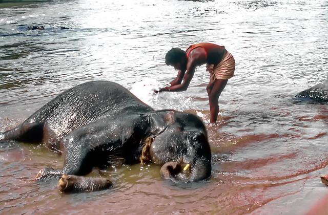 Elephant's Spa and Wellness