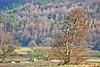 Lindauer Moor 190319-02a by martinritter1